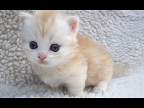 Cutest Animals Ever Are Cute Baby Animals These Top 10 Cute Animal Videos Of Animal Babies Are So Adorable Cute Ki Kittens Cutest Baby Cats Cute Baby Animals