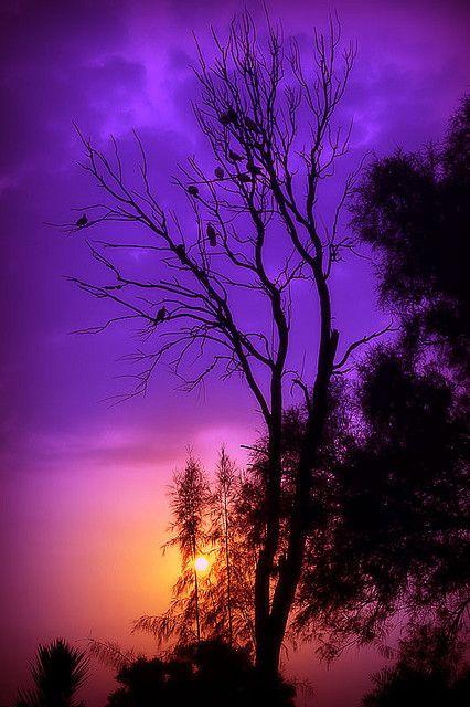 Sunset At Areen - Bahrain