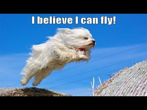 Compilation Fail I Believe I Can Fly Youtube Dog Quotes Dogs Dog Lovers