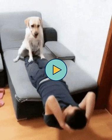 Cão dando uma força no treino do seu dono
