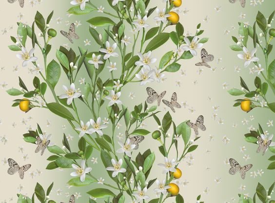 Accent Murals of Orange Blossom by Michael Angove (1000mm x 2400mm) | Shop | Surface View