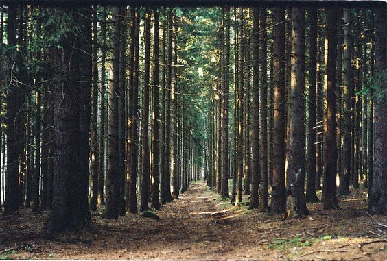 woods.: Try Photography Must Try, Into The Woods, Wild Quotes, Nature Trees, Woods Sportsgirl, Travel Photography, Trees Woodland