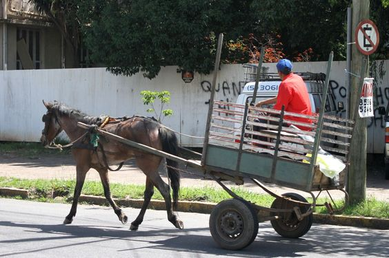 Veterinários atendem de graça cavalos que puxam carroças