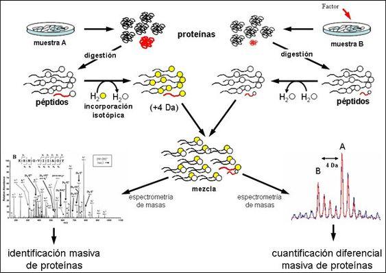 proteómica - Buscar con Google