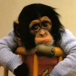Oh Emo Monkey, how can anyone be sad in such a sweater.