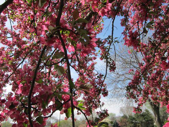 pretty floral bloom