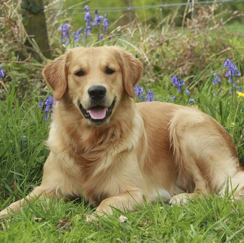 The Most Popular Dog Breeds From Your Childhood Top 10 Cutest