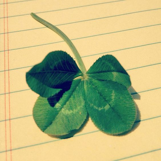 """Lucky day for Heist? We will take the luck of the Irish any day. #onlyinnoda #clt #heist #4leafclover #noda #luck #nashvillelight""   #Instagram"