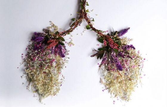 Juxtapoz Magazine - Eye Heart Spleen: Human Organs Made from Plants by Camila Carlow