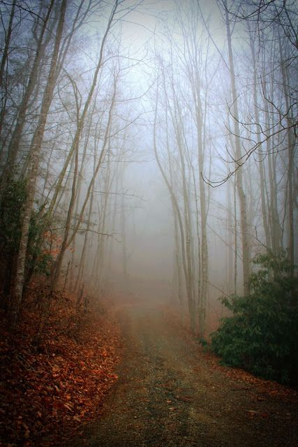 Foggy Morning Walk.