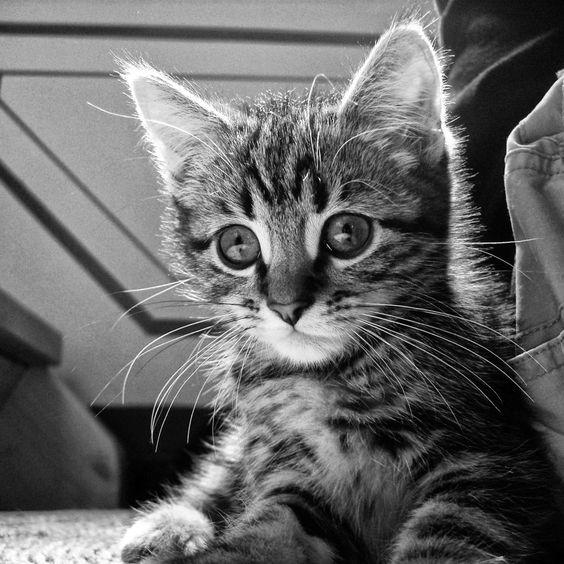 Curious cat black white ipad wallpaper hd ipad - Kitten wallpaper for ipad ...