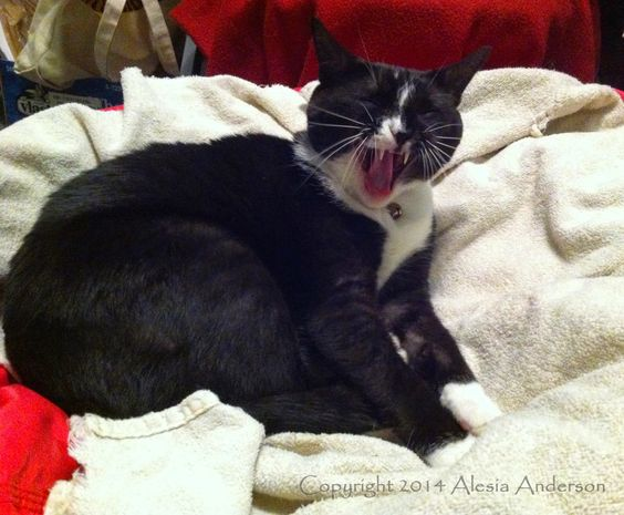 Adventures of The Witty Kitties: Third Book Review: Puss Jekkyl Cat Hyde