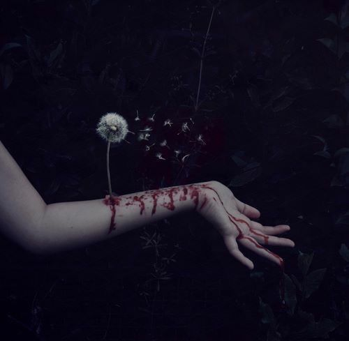 blood photography tumblr / literal, la flor de mis heridas: