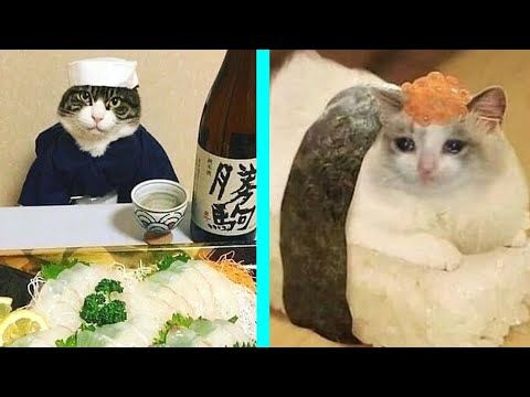 Best Cat Memes Compilation Of 2020 Part 15 Funny Cats Youtube Cat Memes Best Cat Memes Cats