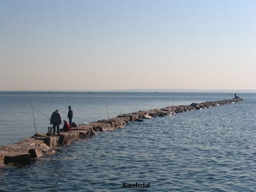 Pinterest the world s catalog of ideas for Long island sound fishing