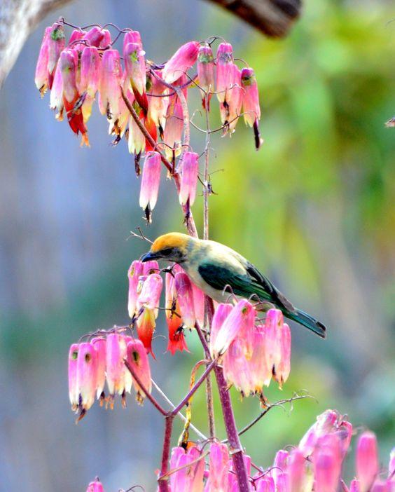 A beautiful bird in Alto Paraiso, Goias.