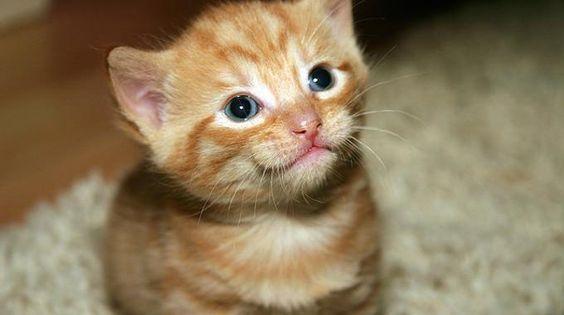 Votre chat ne peut pas s'empêcher de faire pipisur la moquette? Ne vous inquiétez pas ! Il existe une astuce de grand-mère pour nettoyer cette vilaine tache d'urine facilement. L'astuc