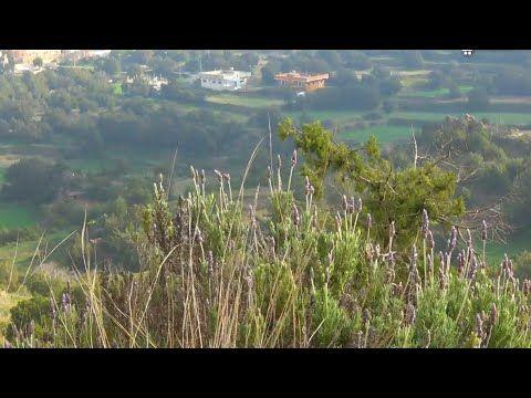 قرى بالحكم محافظة المندق بمنطقة الباحة السبت 14 6 1441 مع صوت محمد الزهراني Youtube Natural Landmarks Outdoor Landmarks