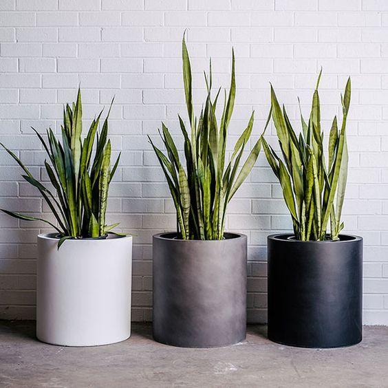 Maseta Para Interior Redondas Plantas En Maceta Macetas Plantas Interior Decoracion