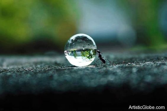 Amazing picture of an Ant pushing a water droplet. | Creative World