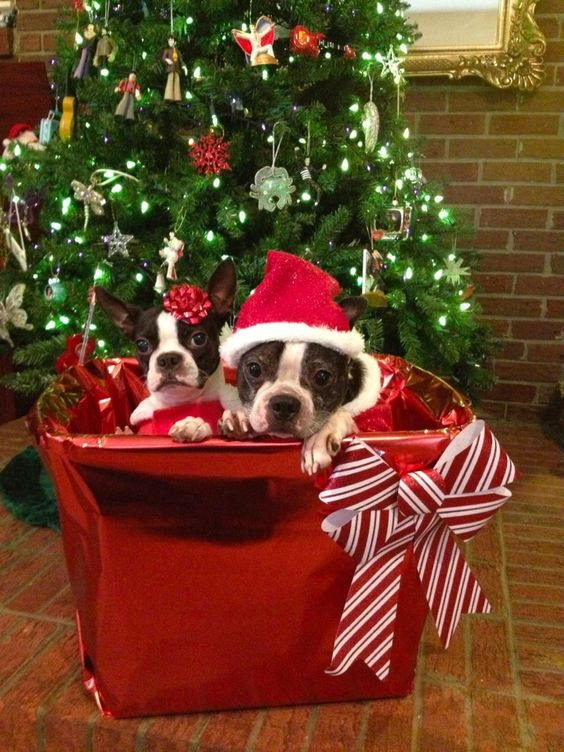 Merry Christmas from Louie and Lillie