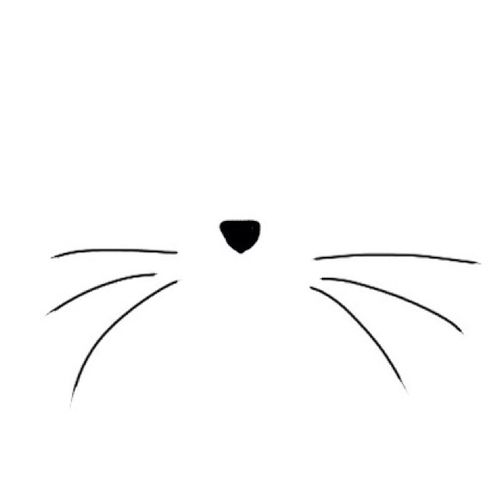 Cats And Cat Whiskers On Pinterest