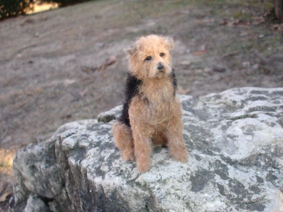 1:4 Norfolk Terrier