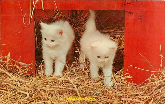 Vintage Postcard Cats White Kittens Playing by ImagesGoneByAgain