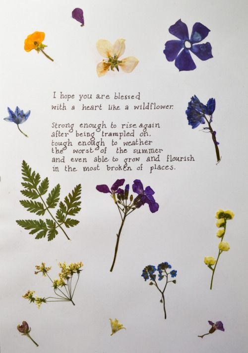 Image Result For Tumblr Quotes Wild Flower Quotes Flower Quotes