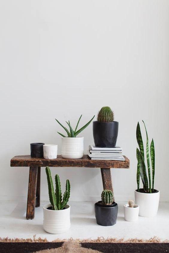 . #plantas #cactus #madera