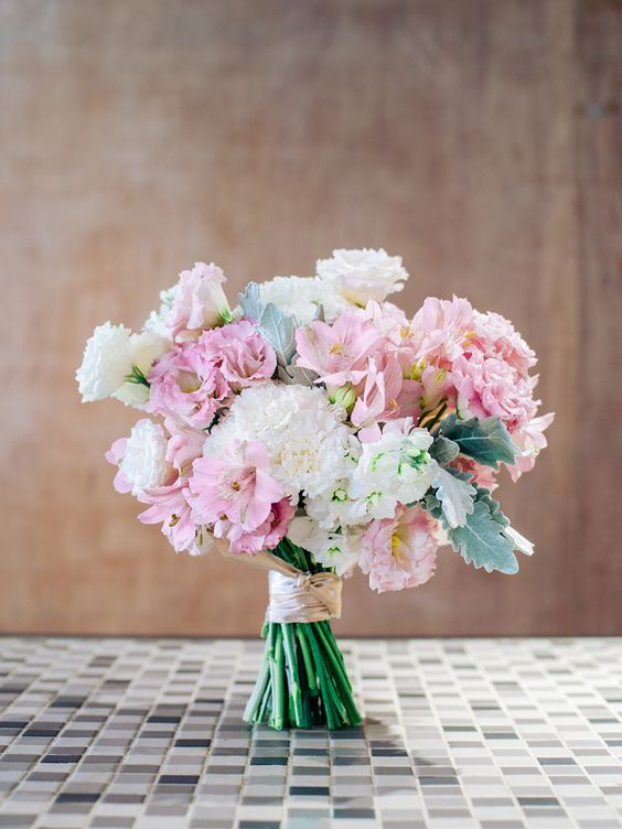 carnation single girls The carnation, in general, is a symbolic flower that has to do with the bonds of affection it is a symbol, also, of health and energy, along with fascination and love.