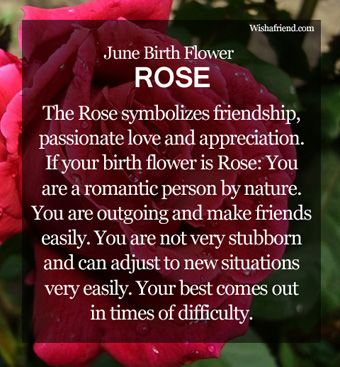 June Birth Flower : Rose Annie girl's favorite flowers are roses!!! I didn't know they were her birth month flower :)
