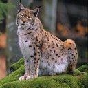 Wir suchen SammlerInnen, die 5, 10, 25, 50, 100 oder mehr Unterschriften für eine jagdkritische Initiative sammeln wollen. Mehr Wildtierschutz wie es der Kanton Genf seit Jahrzehnten vorlebt, ist d...