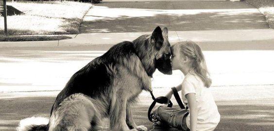 German Shepherd equals love and trust.