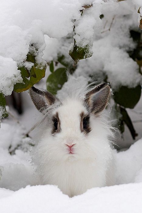 snow bunnies snow and so cute on pinterest. Black Bedroom Furniture Sets. Home Design Ideas