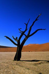 ourney to Namibia, a country of unparalleled beauty and diversity that is world-renowned for astonishingly spectacular desert scenery and a breathtaking coastline. Discover Undiscovered Destinations