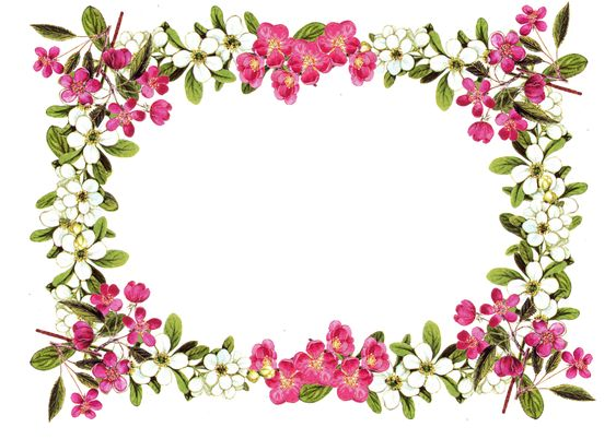 Free Printable Clip Art Borders Digital Flower Frame Png And