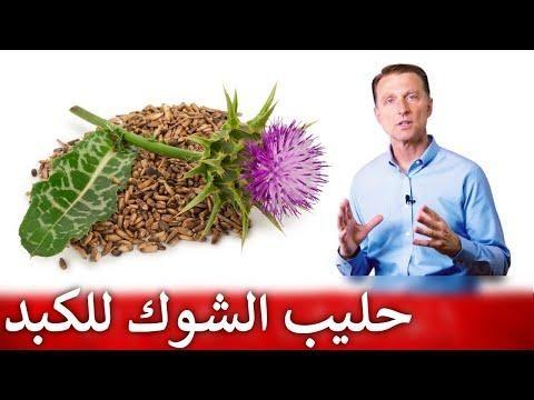 علاج الكبد من الطبيعة عشبة حليب الشوك Herbs Healthy Living Medical