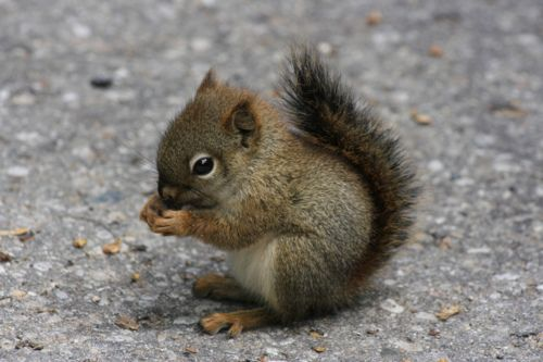 Where can I find a pet squirrel?