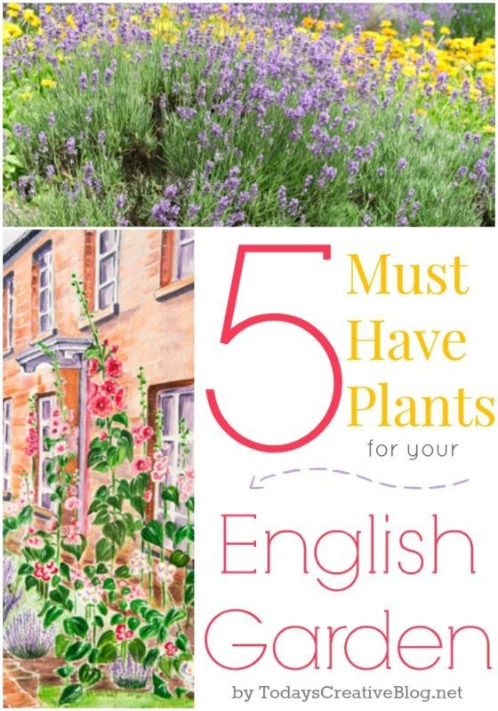 5 Must Have Plants for your English Garden Gardens The cottage