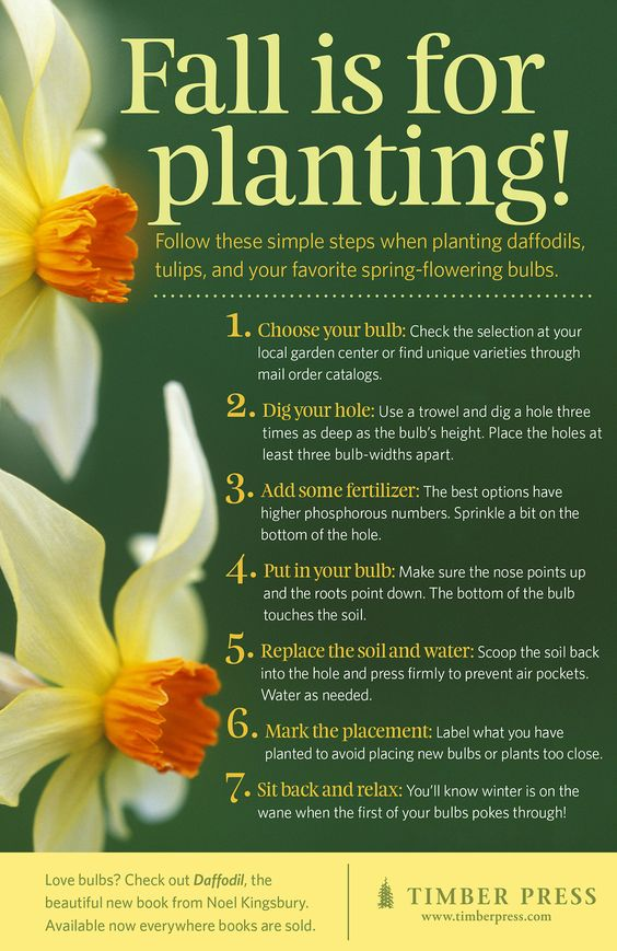 7 simple steps to planting your favorite spring-flowering bulbs!