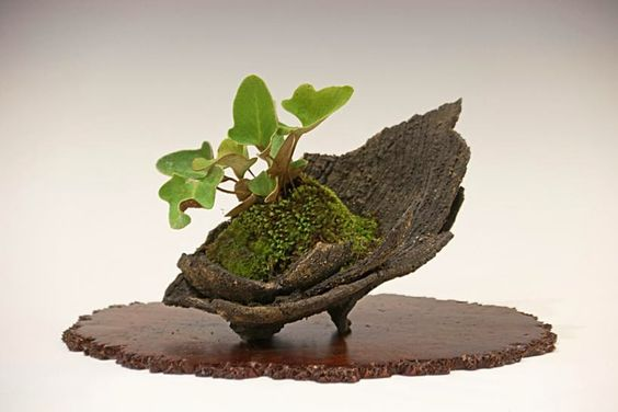 Kusamono bonsai: