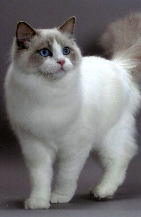Kitten Meowing Litter Box What Kittens For Free London Ontario Past Kitten Meowing New Home Cute Cats Pretty Cats Kittens Cutest