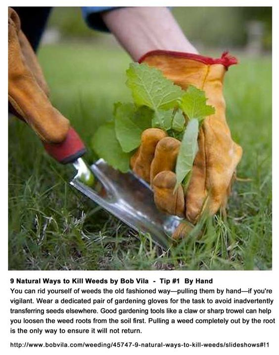 "Even Bob Vila advocates non-toxic alternatives to pesticides! Here's Tip #1 from his ""9 Natural Ways To Kill Weeds"": * Weed By Hand *"