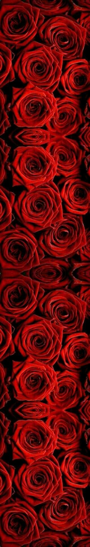 Aug 18...(prompt...3 gifts red, read, written) *red roses ...