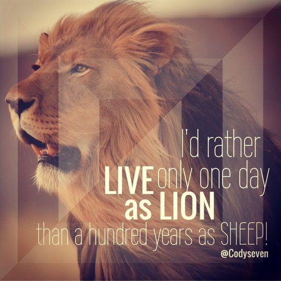 Lion Sheep Quote: I'd Rather Live Only One Day As A Lion Then