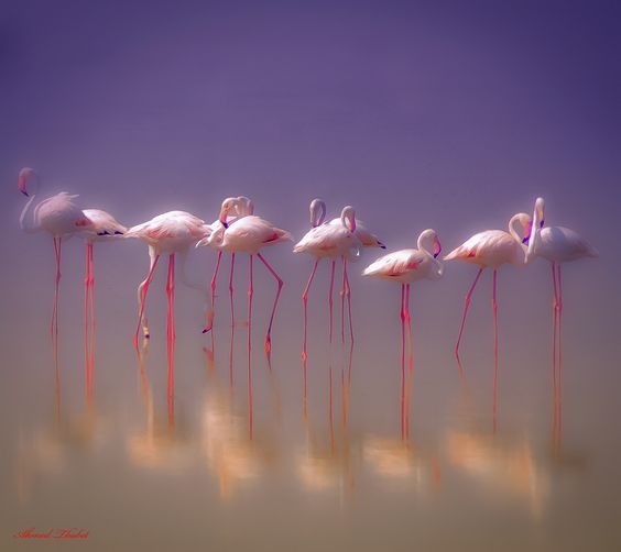 Dream by Ahmed Thabet on 500px