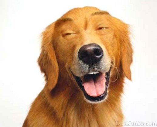 Image Detail For Photoshopped Dog Little Photoshop Play
