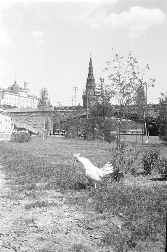 Петух и Кремль  Фото 1960 г. В. А. Грабарского.: