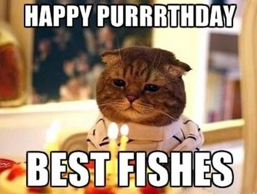 10 Adorable Happy Birthday Cat Memes For A Perfect Birthday Wish Cat Birthday Memes Happy Birthday Cat Funny Happy Birthday Meme